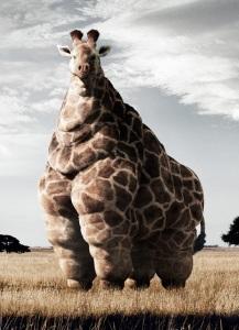 fat_giraffe_ANN